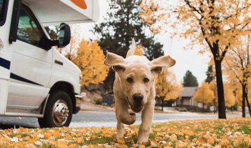 Happy Campers RV Rentals Pet Friendly