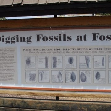 Visit Wheeler High school in Fossil, OR to dig for fossils
