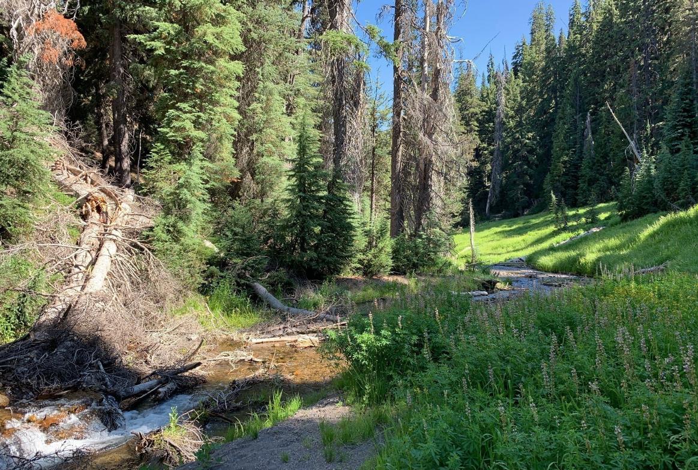 Annie Creek Canyon Trail