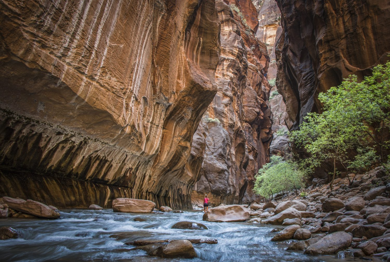 Hiking in The Narrows, Zion National Park, Utah