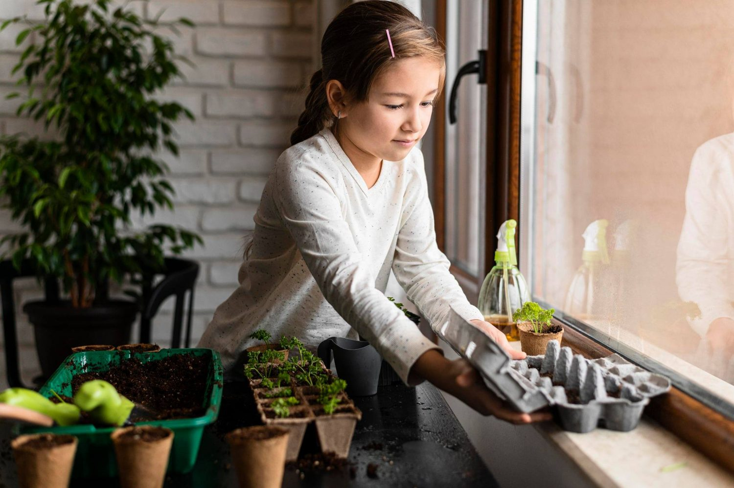 A young girl puts an egg carton of baby plants by the window